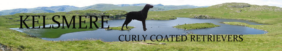 Banner Heading  Kelsmere Curly Coated Retrievers