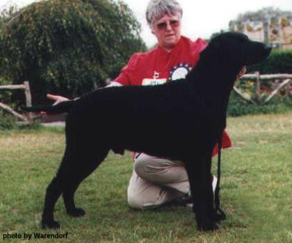 Sorrel with Margaret Bett - Kelsmere Curly Coated Retrievers